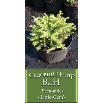 Ялина європейська (Picea abies Little Gem)