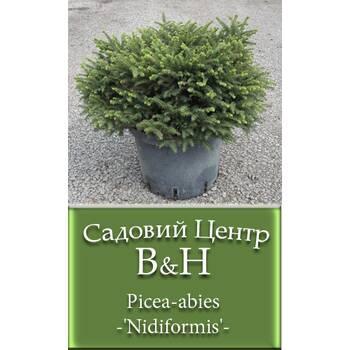 Ялина звичайна Нідіформіс (Picea abies Nidiformis)