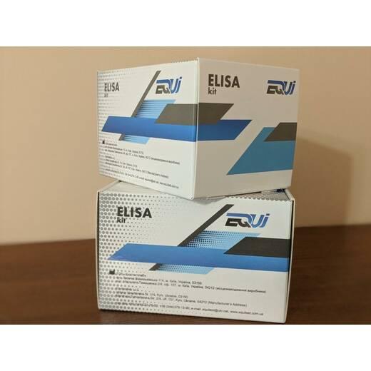 ІФА набір на коронавірус EQUI SARS-CoV-2 IgМ EI-161
