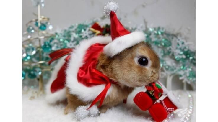 Японські кролики прогулювались в новорічних костюмах