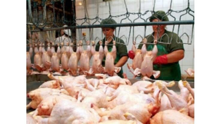 Імпортне м'ясо все рідше потряпляє на ринки України