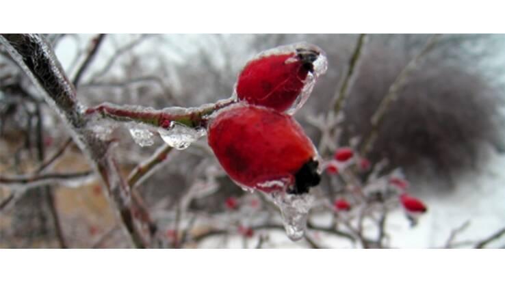 Погода в Украине: морозы уверенно отступают