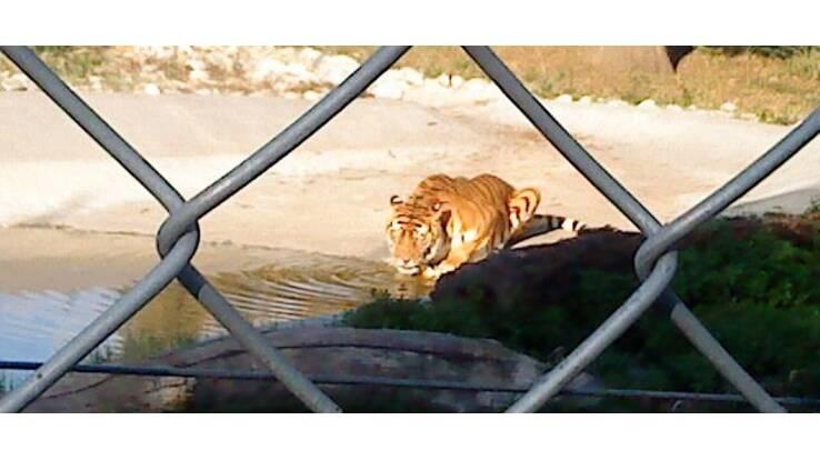 Київським зоопарком займеться СБУ