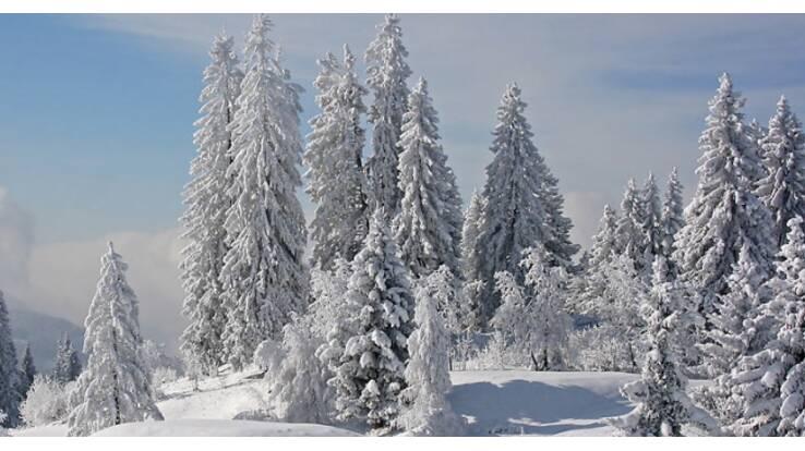 Завтра зима будет спокойной