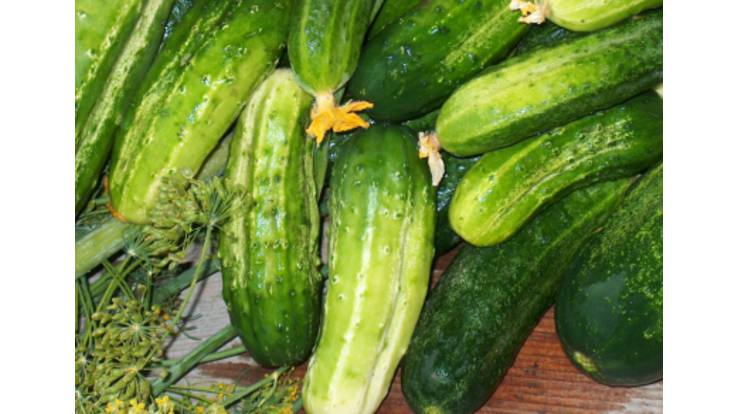 The cost of Ukrainian cucumbers to depend on Russia