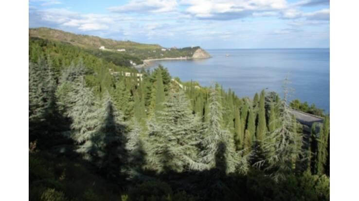 В Крыму в лес будут пускать только по билетам