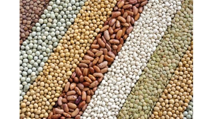 Украина экспортировала рекордное количество зерна