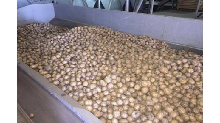 Украина в марте увеличила экспорт картофеля в 6 раз