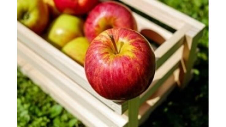 В Україні буде дефіцит яблук