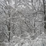 Синоптики прогнозують морози до 15-20 градусів