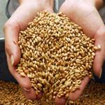 Wheat to become more expensive due to Ukraine