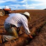 """Податкова почала """"штормити"""" фермерів"""