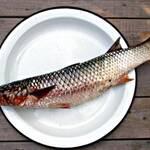 Швейцарія допоможе Україні вирощувати рибу