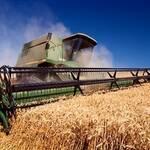 Україна займе друге місце в світі з експорту зернових
