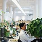 Вчені знають як збільшити продуктивність роботи офісних працівників