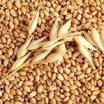 Прорыв в области биотехнологий: выращивание зерновых культур при помощи Led ламп