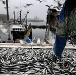 На Азовському морі збільшився вилов риби