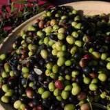 Покупайте активный ингредиент PANTROFINA® OLV