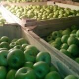 Продаем яблоки - купить оптом можно здесь!