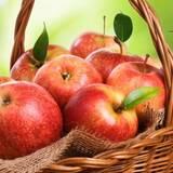 Купити яблука оптом в Україні недорого!