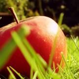 Яблука оптом купити вигідно і зручно!