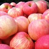 Фуджи яблоки оптом недорого