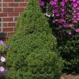 Заказать декоративные кустарникии деревья оптом