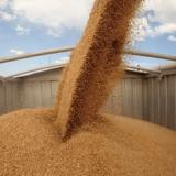 Вартість зберігання зерна на елеваторі Україна найкраща у нас
