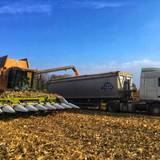 Послуги зерновоза ціна найдоступніша на українському ринку!