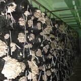 Купити грибні блоки гливи