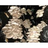Купити грибні блокигливи
