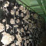 У продажу грибні блоки гливи