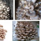 Реалізуємо грибні блоки гливи