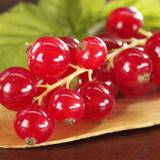 Замороженная красная смородина — покупайте в нашем интернет-магазине!