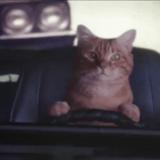 Услуга «Трезвый водитель»