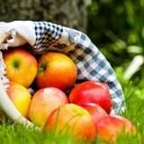 Якщо купувати яблука оптом, то тільки в українського постачальника! Замовляйте!