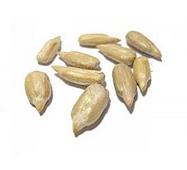 Семена подсолнечника очищенные