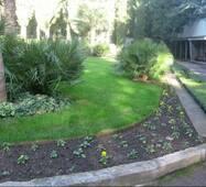 Насіння Королівський сад