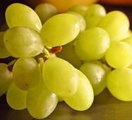 """Саженец винограду  """"Долгожданный"""""""