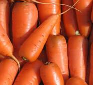Морковь Аленка за 20 г