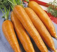 Морква Королева Осені (за 20 г)