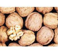 Привитые саженцы грецкого ореха Казаку