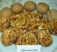 Саженцы ореха сорта Бричанский