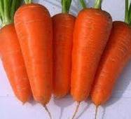 Насіння моркви Болтекс F1