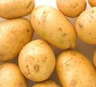 """Картопля сорт """"Рів'єра"""""""