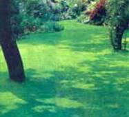 Универсальная смесь газонных трав
