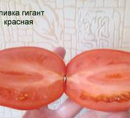 Томат Сливка гігант червона (ЕТМ-272) за 0,1 г
