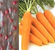 семена на ленте Морковь Талисман
