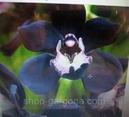 Семена- орхідея 10шт усього 35гр