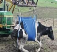Подъемник для коров МK-2, купить